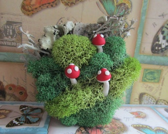 Red Clay Toadstool Mushroom & Green Moss Woodland Scene on Wood Magnet with Preserved Lichen