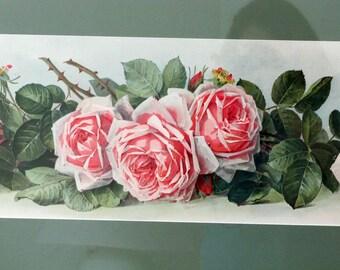 "Paul de Longpre Original Yard-long Flower Chromolithograph ""Roses"""
