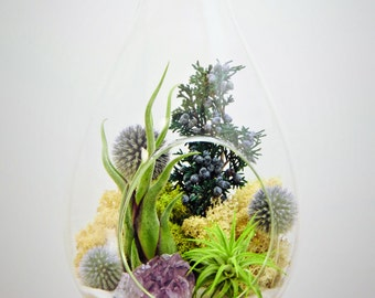 "Teardrop Air Plant Terrarium Kit Extra Large 13"" with Amethyst Crystal / 2 Tillandsia Airplants / Shabby Chic"