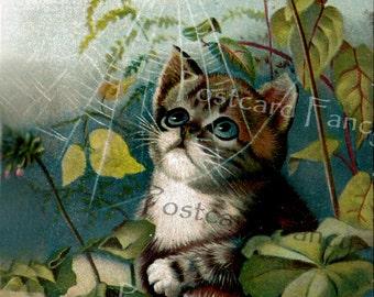Curious CAT Looking at spider web, Vintage Postcard, Instant Digital Download