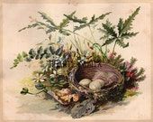 Vintage Birds Nest With Eggs Print to Frame Downloadable, Printable Digital Art Image Instant Download