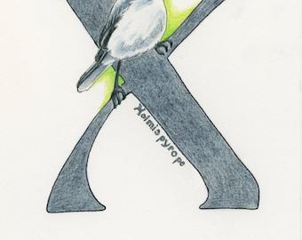 Avian Alphabet X