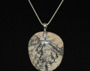 Beautiful Polished Fossilized California Sand Dollar Pendant on a Sterling Silver Chain