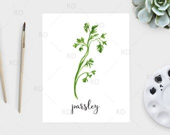 Parsley watercolor - PRINTABLE Wall Art / Parsley print / Herb printable / Herb print / Herb art / Parsley Art / Kitchen art / Kitchen print