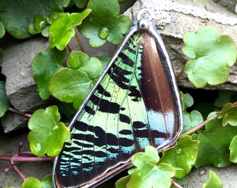 Real Sunset Moth Butterfly Wing Reversible Pendant on a Sterling Silver Chain. Nature's Reliquaries Collection