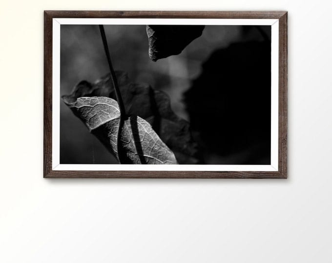 Photography printable art Photo wall art BW photo Printable Wall Art Downloadable Prints Leaves Art Poster Botanical print Plant Photography