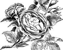 Rose Baby  Plastisol Heat Transfer (In-Stock)