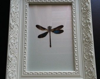 Dragon fly in a white decorative frame
