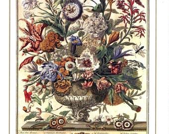 September Floral Botanical Illustration Print - Bowles Winterthur Monthly Flower Arrangement - wedding anniversary new baby birth gift idea