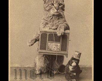 Super RARE & Wonderful Antique Photograph of an Organ Grinder Cat!