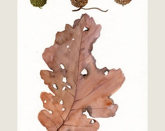Acorns and oak leaf,  original watercolor painting, fall season, leaf art, acorn art, brown leaves, forest, nature, botanical, leaf painting