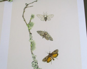 Moths with Lichen Covered Branch (Limited Edition Print)