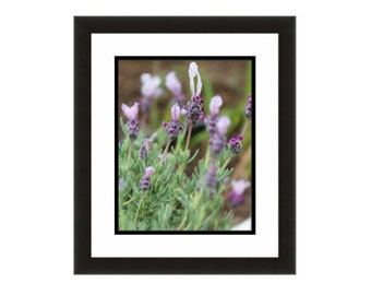 Lavender print Lavender photography Purple flowers Photo of Lavender Flower photo Flower wall art Gifts for gardeners Purple Lavender art