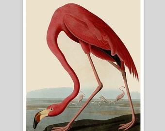 American Flamingo by John James Audubon Vintage Art Print