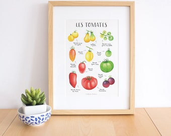 Tomato print, tomato art print, Watercolor tomatoes, tomato chart, kitchen wall art, Vegetable poster, Vegetable art, food poster
