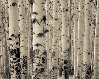 Aspen trees photo, Colorado art, rustic decor, cabin art, horizontal wall art, aspen tree decor, livingroom wall art | Muted Aspens