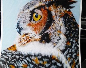 Owl in Color Pencil 8x10 Print