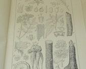 Antique Circa 1900 Print from Equestrian Book  Medicinal Plants I
