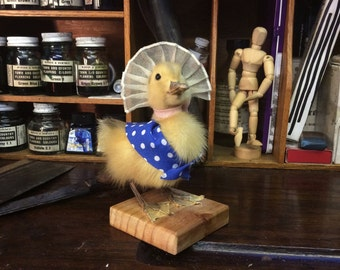 Jemima The Taxidermy Duckling