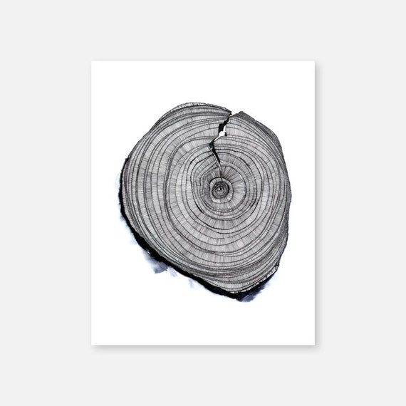 Wood SLICE : Archival Print on Etching Paper, Hand-drawn Tree Trunk Slice, Minimal Color