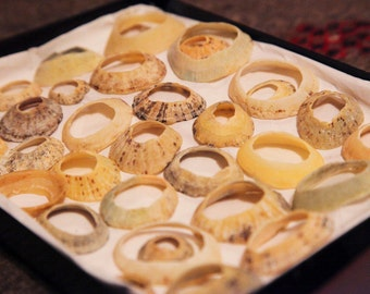 33 Circular limpet shells collected from beach for display/ jewellery/ sculpture