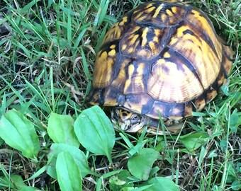 Turtle Digital photograhy