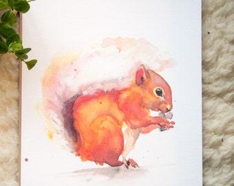 Wild: Squirrel