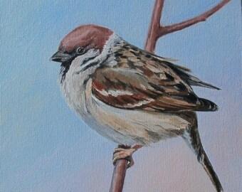 """Sparrow. Original oil painting handmade 7x8 """"(18х20 cm) beautiful birds, wildlife, painting, art"""