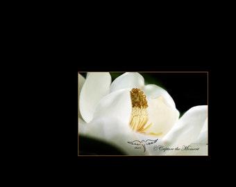Fluer De Blanc
