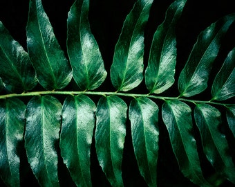 Large Wall Art, Green Wall Decor, Nature Photography, Bold Prints, Leaves, Large Nature Print, Modern Wall Art, Contemporary Home Decor