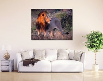 Wildlife Print, Wildlife Photography, Wildlife Art, Lion, Lion Print, Lion Canvas, Africa Art, Africa Canvas, Metal Wall Art, Metal Print
