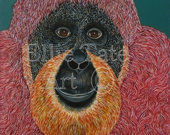 A4 Limited Edition Print - Sumatran Orangutan