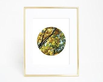Circle Prints, Circle Photography, Fall Wall Art, Circle Wall Art, Fall Prints, Fall Photography, Autumn Wall Art, Autumn Photography