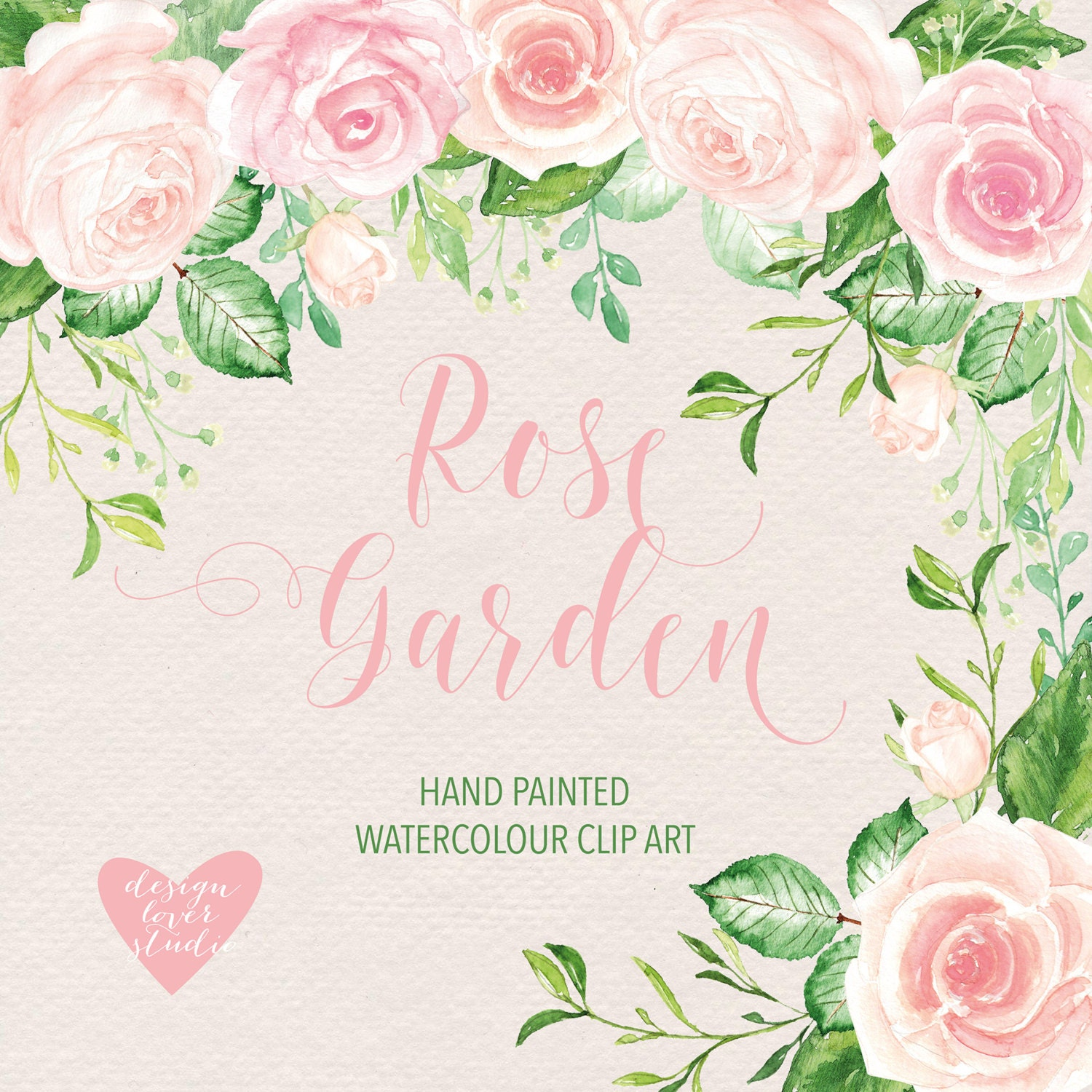 watercolor rose blush clipart watercolor flower pink