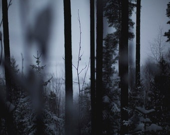 Nature photography, dark forest, mystical woods, trees in the winter, Norway photography