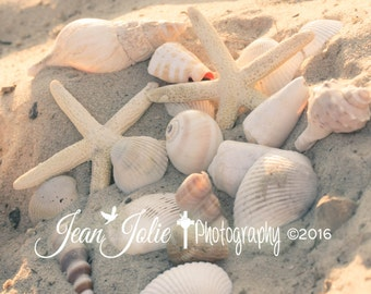 "Beach Photography- Gold and white shells coastal collection nature seashore fine art photograph ""Golden Treasures"""