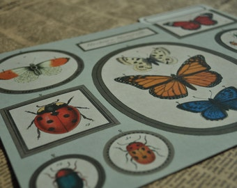 Cavallini & Co. Butterflies and Insects File Folder, junk journal, journal cover.