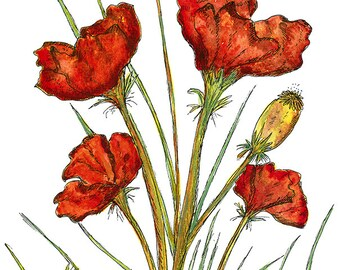 Red Poppies - MOUNTED, Fine Art Print