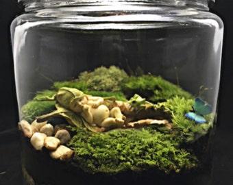 Baby Terrarium-Fairy Terrarium-Moss Terrarium-Baby Shower Gift-TerraSphere