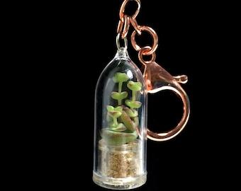 Live Succulent KeyChain / Mini Succulent Terrarium KeyChain/ Miniature Terrarium / Nature Jewelry Necklace