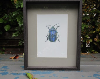 Animal-friendly insects Cabinet-ash cock in (slightly damaged) wooden frame