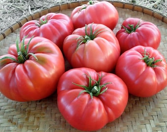 30+ ORGANICALLY Grown Giant 1LB Ponderosa Pink Tomato Seeds NON-GMO Low Acid Sweet Delicious Productive Rare Unique!