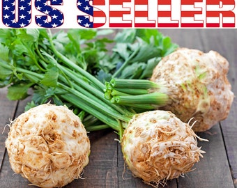 150+ ORGANIC Giant Prague Celeriac Seeds Heirloom NON-GMO Root Knob