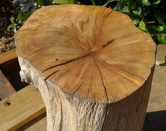 Tree trunk 'Petrified'
