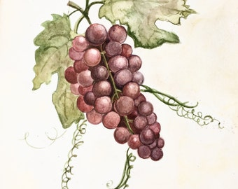 Red Grapes on Vine/ Watercolor Art Print/ Nursery Art/ Vineyard/ Nature/