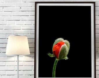 Poppy flowers Print Poppies Printable Art Poppy flowers photo Black and Red flowers Instant Download Flower Meadow Print Kitchen Decor