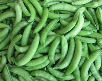 Sugar Snap Peas (select 15 thru 50 LB seeds) Premium Cool Season Vining Var.! C2