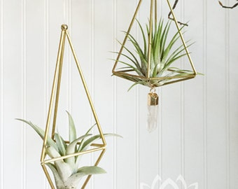 Zen Himelli Air Plant with Stone by Zentilly©