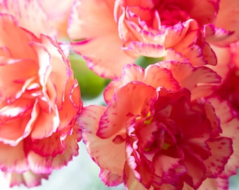 Delicate Carnations
