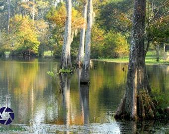 Cypress Trees Print